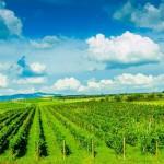 vitis-metamorfosis-wine-producer-romania
